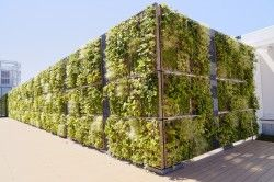 TOYAMAキラリ 9階 壁面緑化ユニットタイプ