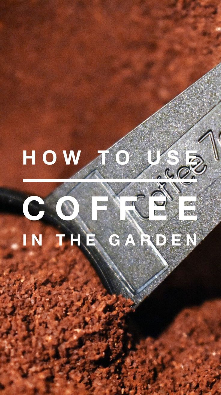 Learn how to use coffee in compost and as fertilizer.