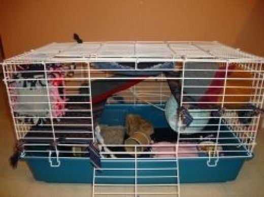 A decent cage for two male rats as long as they have a good amount of exercise and cuddles outside the cage. But too wide of bar spacing for girls or young ratties. Really good easy ideas on accessories.