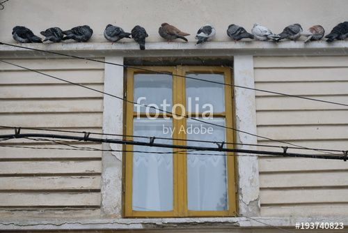 """Download the royalty-free photo """"Pigeons on the cornice of a house during a winter day, Bucharest, Romania"""" created by yournameonstones at the lowest price on Fotolia.com. Browse our cheap image bank online to find the perfect stock photo for your marketing projects!"""