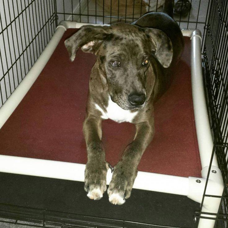 Crate Bed | Dog Beds | Kuranda Dog Beds