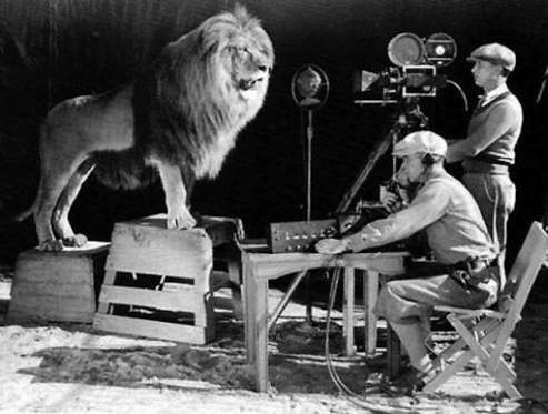 Metro-Goldwyn-Mayer's mascot, just before his roar is captured for the MGM logo.How Celebrities Like... - Purpleclover.com