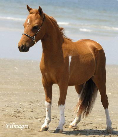 Site de rencontre amoureux des chevaux