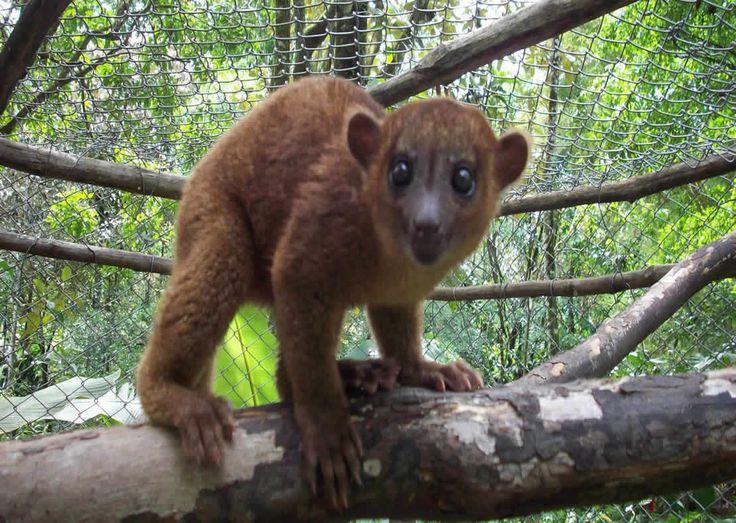 amazon rainforest animals collage. amazon rainforest animals pictures tropical plants collage 1