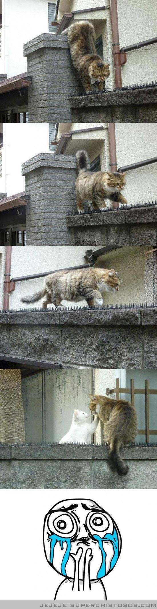 Prueba de amor felina