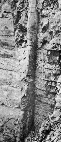 This polystrate tree trunk was found in Germany.  It extends up through several layers of sedimentary rock. This tree was obviously buried rapidly. This is real evidence of the catastrophic flood the Bible tells us about in Genesis.