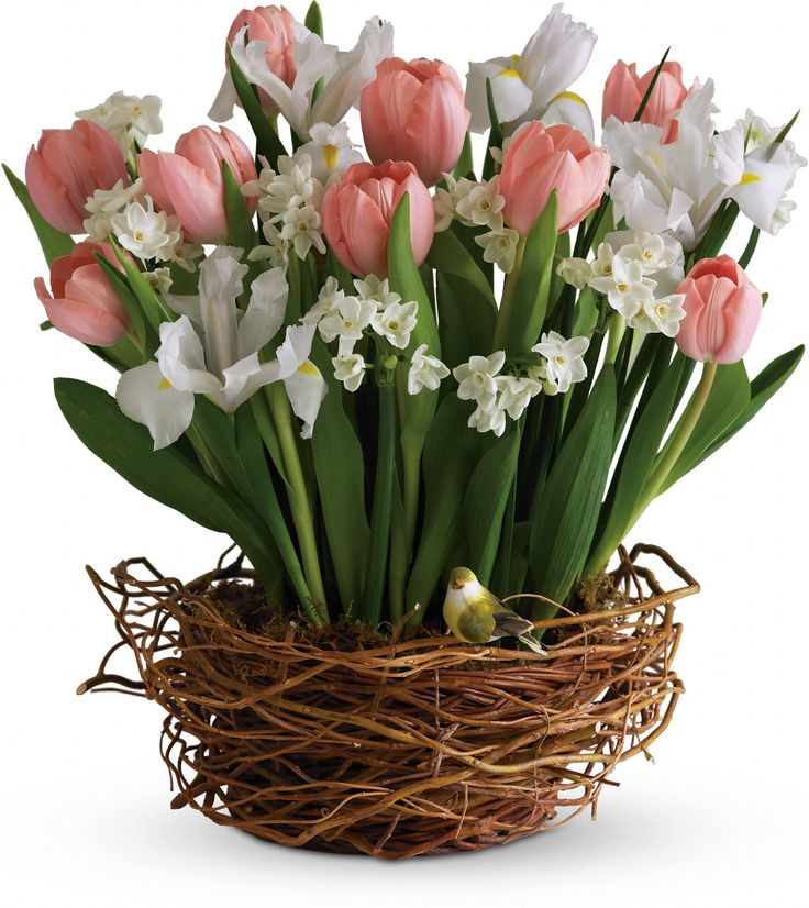 Tulip Song Flowers Cheer Up Adee Heres A Spring Tastic Way To Brighten Someones Day Darling Birds Nest Bursting With Beautiful Tulips