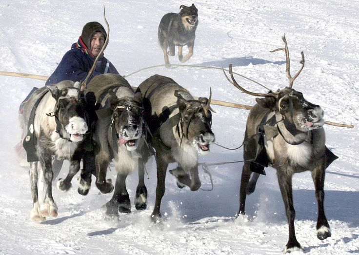 Two Canadian archaeologists are on their way to a remote part of the Russian Arctic hoping that the traditional knowledge of Nenets reindeer herders might be able to help them solve an archaeological mystery that could have far reaching implications for our understanding of ancient Arctic history.