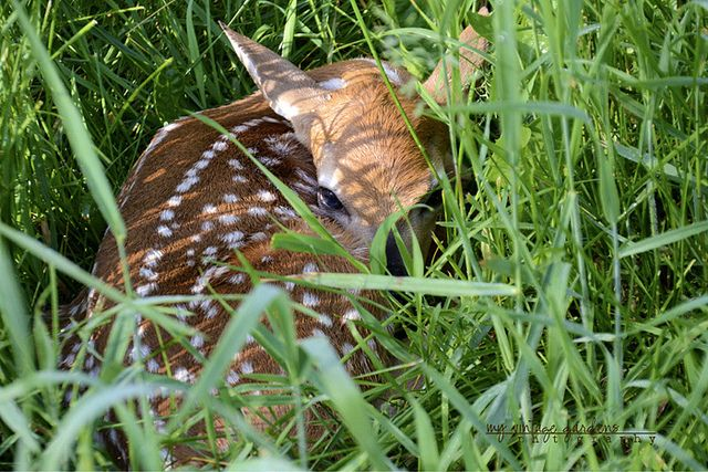 250 Best Images About FAWN BAMBI On Pinterest Mothers