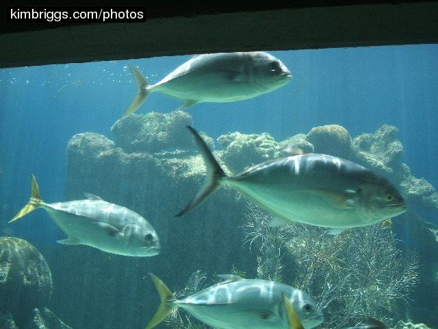 34 best images about virgin islands fish on pinterest st for Virgin islands fishing