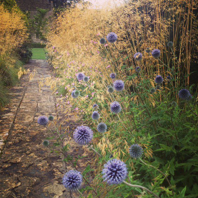 Combination inspiration: echinops + Stipa gigantea / The Courts Garden, Holt