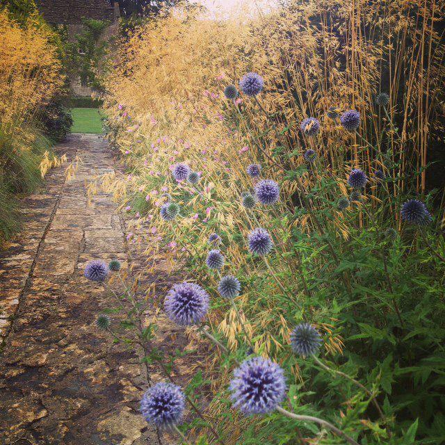 Combination inspiration: echinops + Stipa gigantea / The Courts Garden, Holt