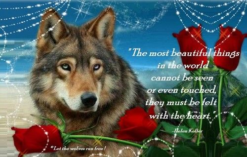 The Most Beautiful Thing To Hear When You Tell Someone You: Photo Of Wolf Poems For Fans Of Wolves. Wolf Peoms Of