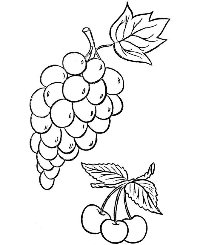 grape vine coloring pages - photo#9