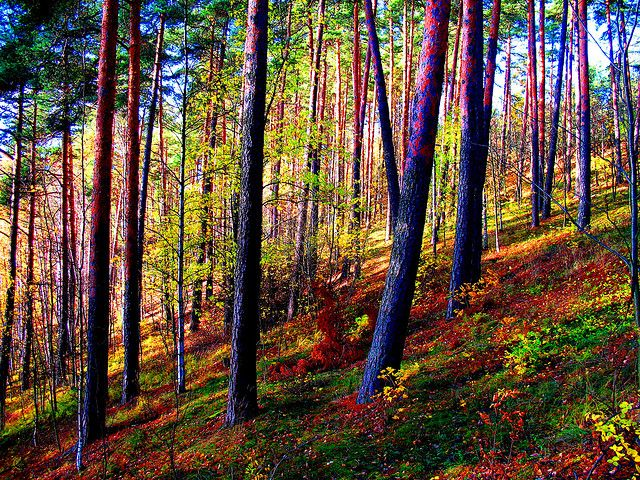 Pispala forest, Tampere.