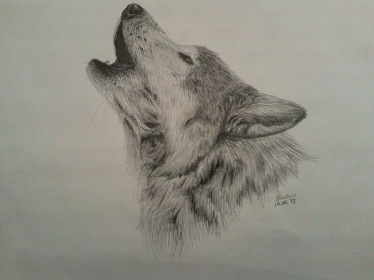 Gray Wolf Howling Drawing Best 25+ Wolf h...