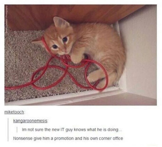 Best Cats Images On Pinterest Cats Funny Cats And Funny - 20 hilarious cat photobombs