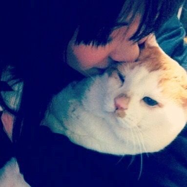 R.I.P. Nekotaro Part5 We Love You❤️ すべてのハロプロファンからぬんとぅんのご冥福をお祈りします😭 #juicejuice #金澤朋子 #かなとも #ハロプロメンバー猫 #ハロメン猫 #愛猫 #ぬんとぅん #猫太郎 #ぶさかわ #ぶさかわ猫 #野良猫 #里親 #ご冥福をお祈りします  #cat #cutecat #chubbycat #rip #weloveyou  #tomokokanazawa