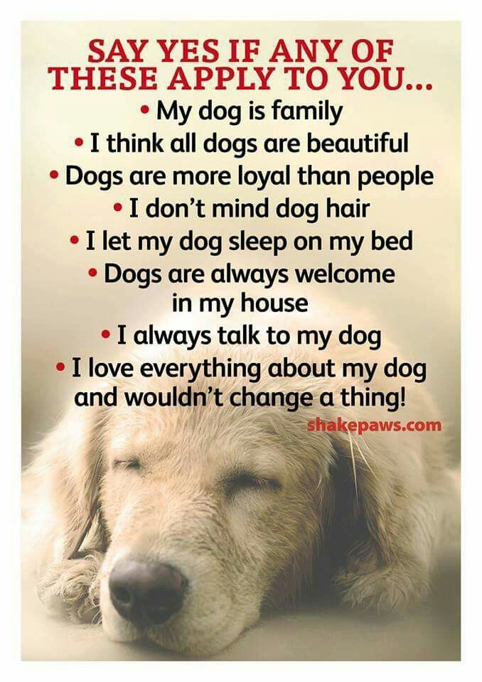 all are true if i had a dog except for dot point no.5 because i toss/turn/kick a lot in my sleep i wouldn't want my dog on my bed because i don't know what will happen lol