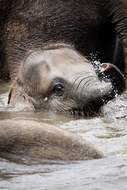 """baby elephant"" by Björn Mika)"