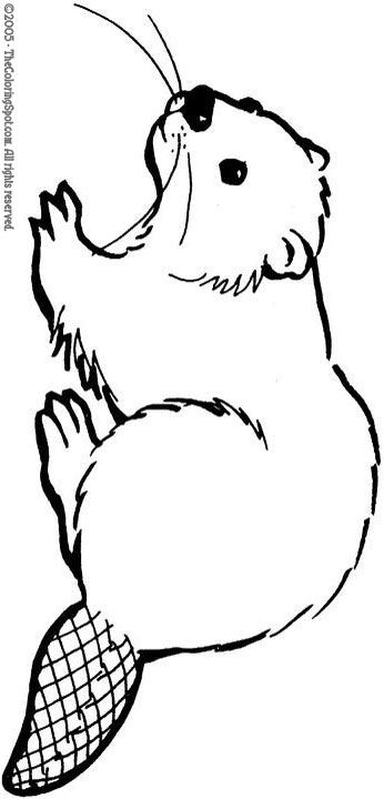 Google Image Result for http://thecoloringspot.com/wp-content/uploads/2011/05/beaver.jpg