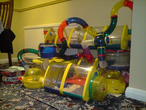 Super Cool Hamster Cages | Critter Hub