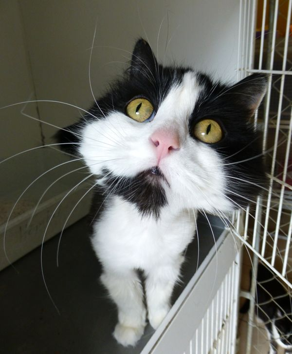 About cat adoption. Find out more at www.pets4life.com.au