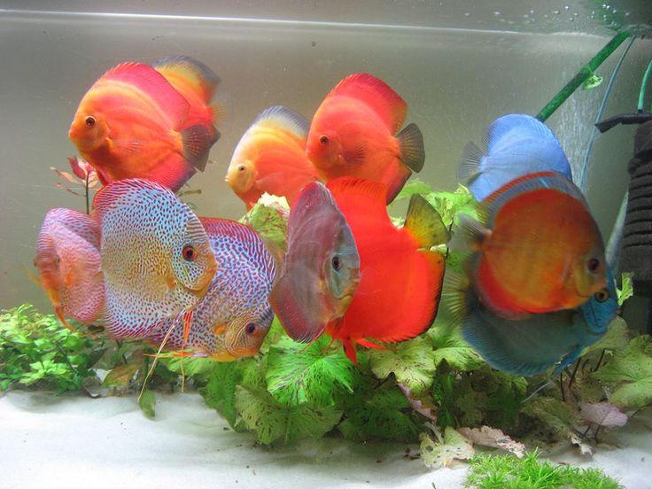 17 best images about guppy aquarium on pinterest for Petsmart fish guarantee