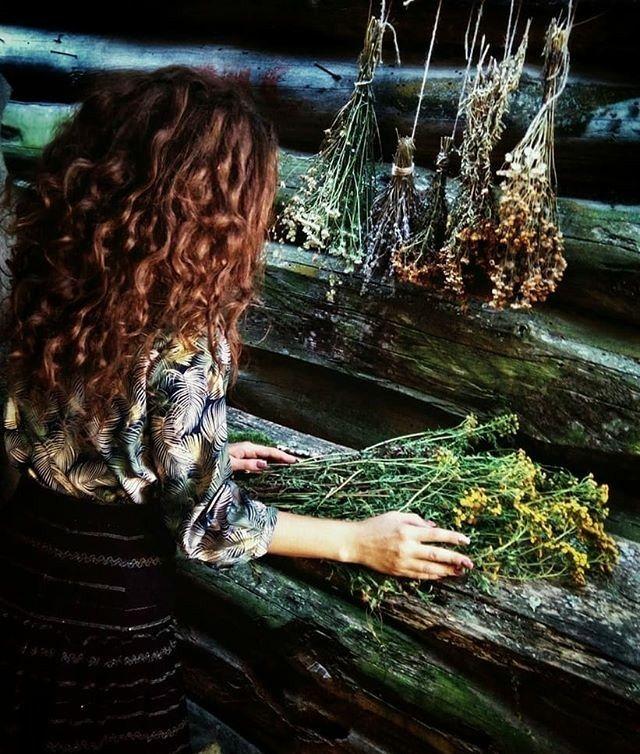 ведьмины травы картинки правильном