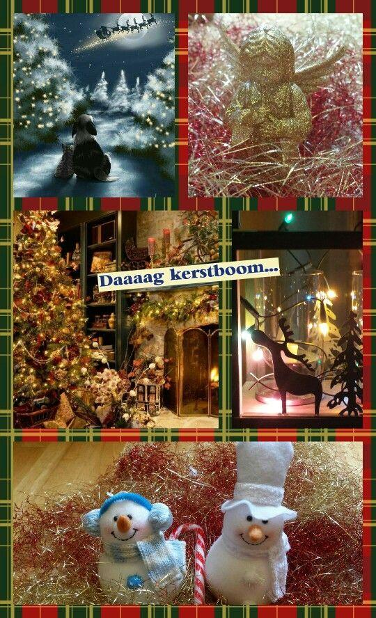 Kerst voorbij, nog snel een paar foto's
