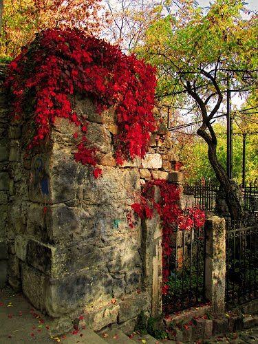 Red autumn in Cismigiu Park, Bucharest