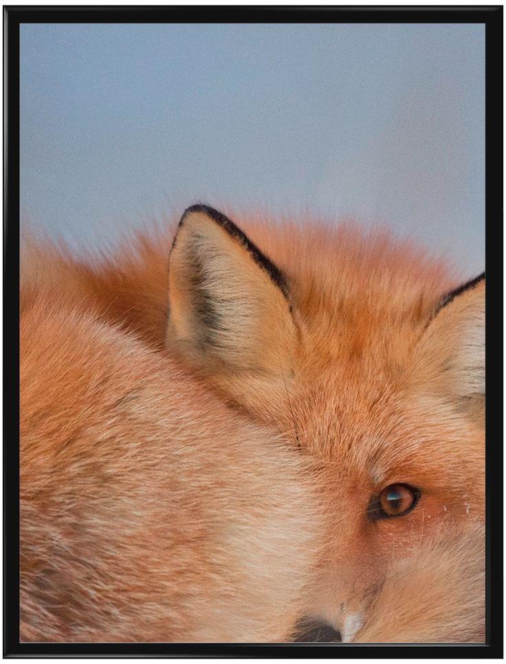 Handla din egen Fox poster från Galerie här. Vi levererar alltid våra posters…