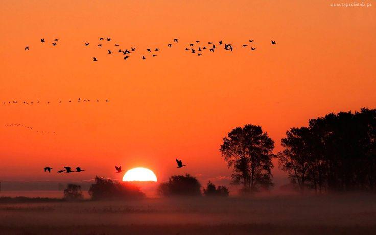 Mgła, Zachód, Słońca, Drzewa, Ptaki