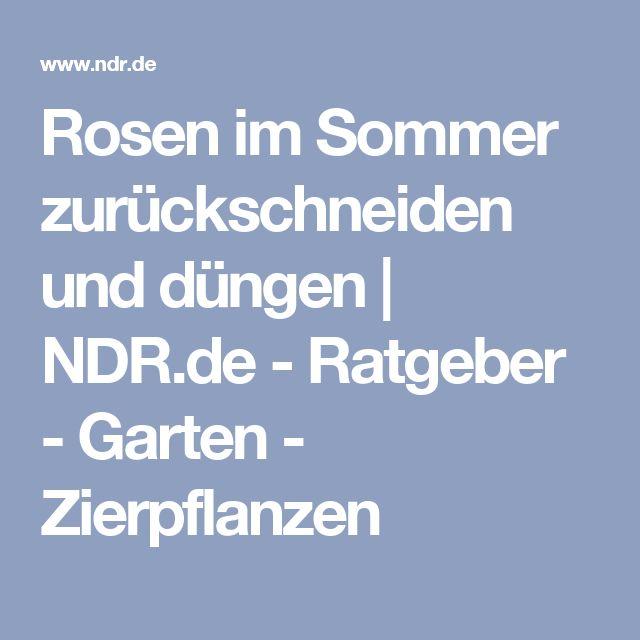 Rosen im Sommer zurückschneiden und düngen | NDR.de - Ratgeber - Garten - Zierpflanzen