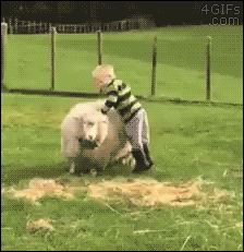 You on kid? Let's ride. http://www.tastefullyoffensive.com/2015/08/little-boy-tries-to-ride-sheep-like.html