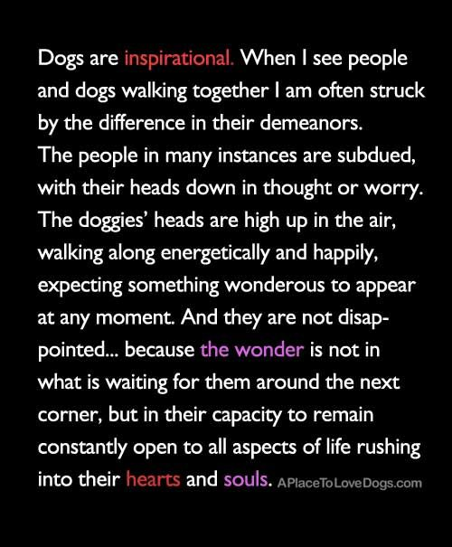 Dogs Are Inspirational