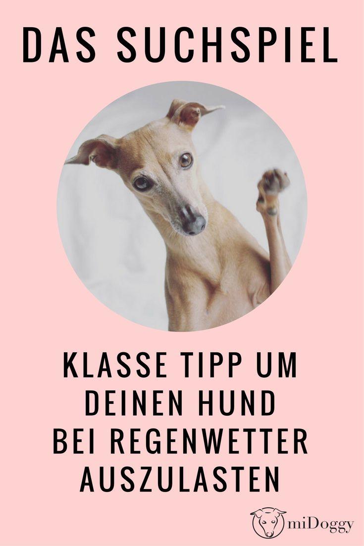 Hund | Auslastung | Schnüffeln | Suchspiel | Regen