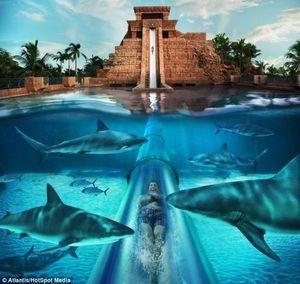 9階の高さからサメの泳ぐプールに突っ込むウォータースライダーが怖すぎる!