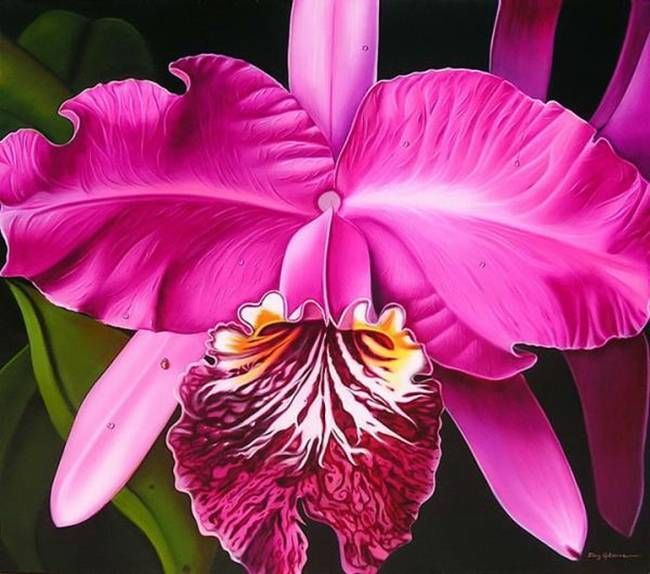 White Orchid Water Pink: 107 Best Paintings Of Orchids Images On Pinterest