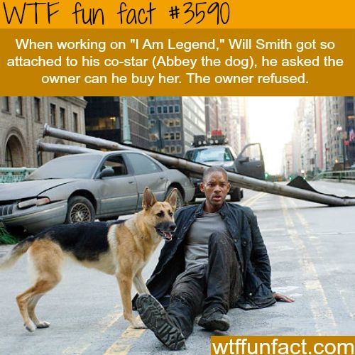 "The dog and Will Smith in ""I am  legend"" -  WTF fun facts"