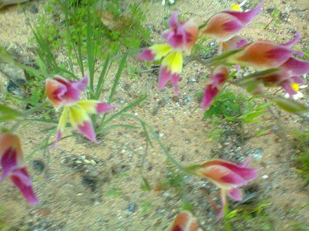Very delicate flowers. Also wild flowers