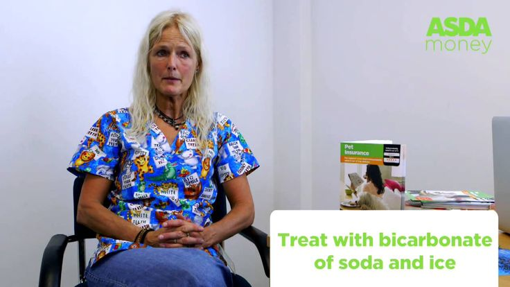 Video How to treat cat & dog insect stings or bites | Asda Pet Insurance