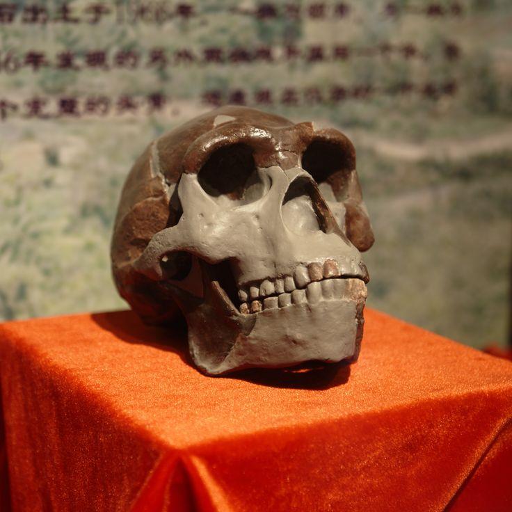 "Homo erectus ""peking man"" dated  680,000–780,000 years old from China"