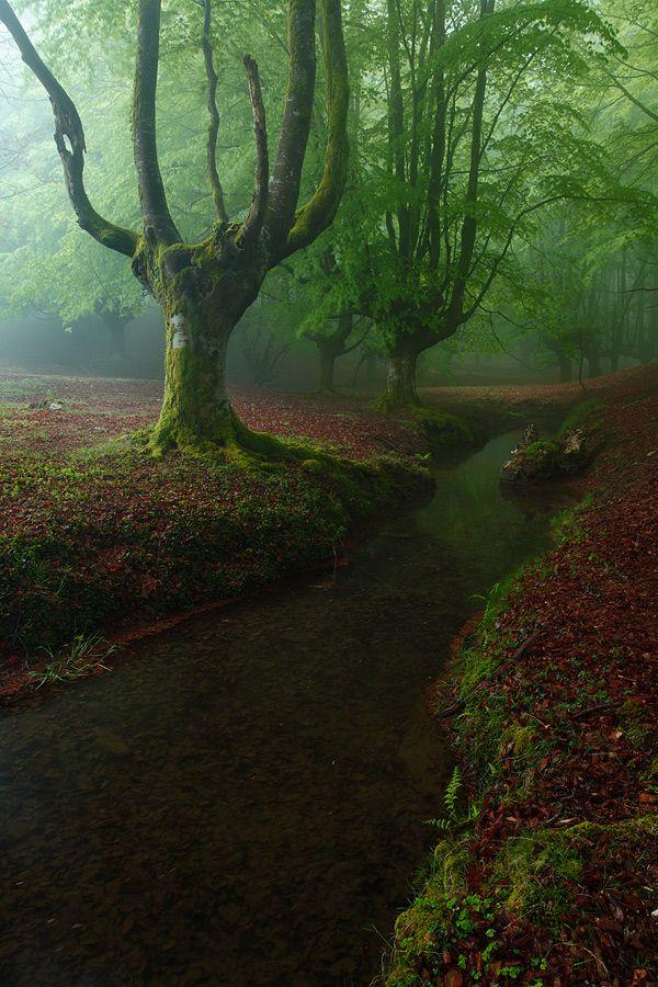 Otzarreta Forest / Bizkaia, Spain ... y ese lugar existe pa mas piedra... YOO QUIERO IRME A ESPAÑA!!