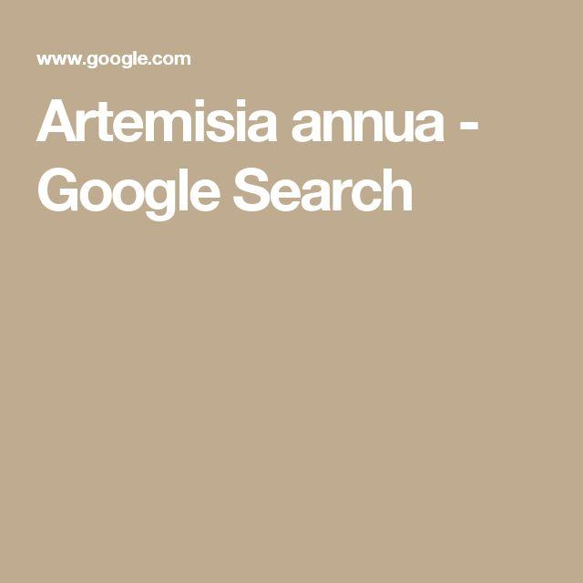 Artemisia annua - Google Search