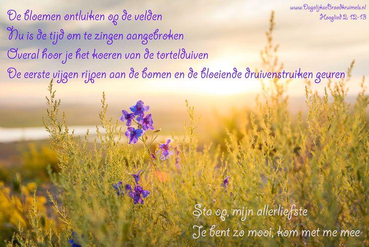 De bloemen ontluiken op de velden. Nu is de tijd om te zingen aangebroken. Overal hoor je het koeren van de tortelduiven. De eerste vijgen rijpen aan de bomen en de bloeiende druivenstruiken geuren. Sta op, mijn allerliefste. Je bent zo mooi, kom met me mee. Hooglied 2: 12-13  #Leven, #Schepping, #Vreugde  https://www.dagelijksebroodkruimels.nl/hooglied-2-12-13/