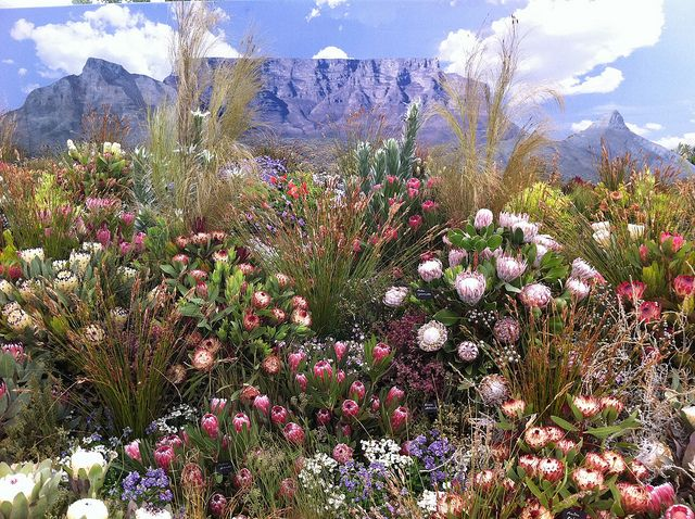 Plants of South Africa. BelAfrique your personal travel planner - www.BelAfrique.com