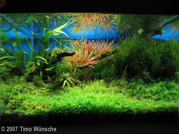 ... about aquariums on Pinterest Fish aquariums, Wall aquarium and Aga
