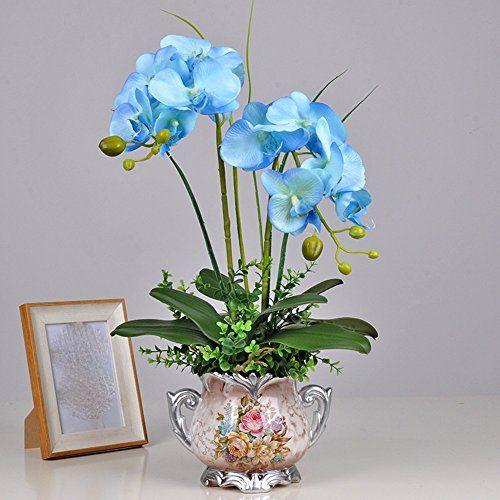 orchidee piante vere blu