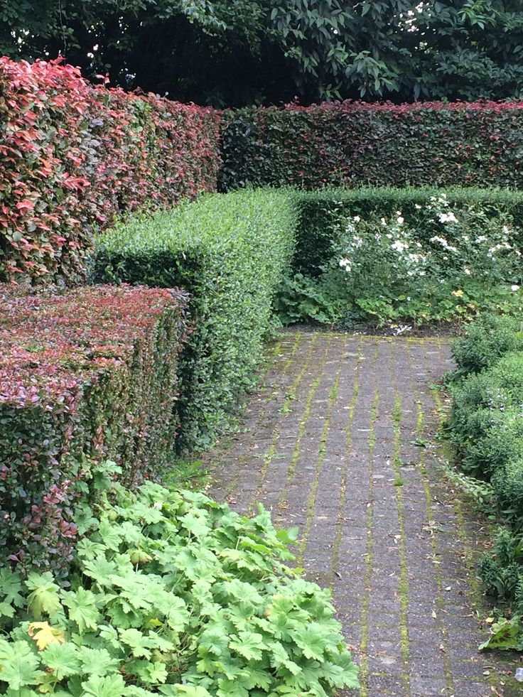 37 best ideas for hedging images on pinterest gardening for Garden design east lothian